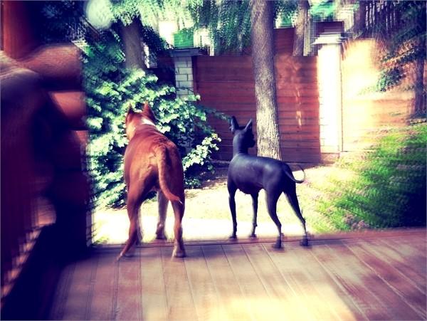 Фредди и МОника