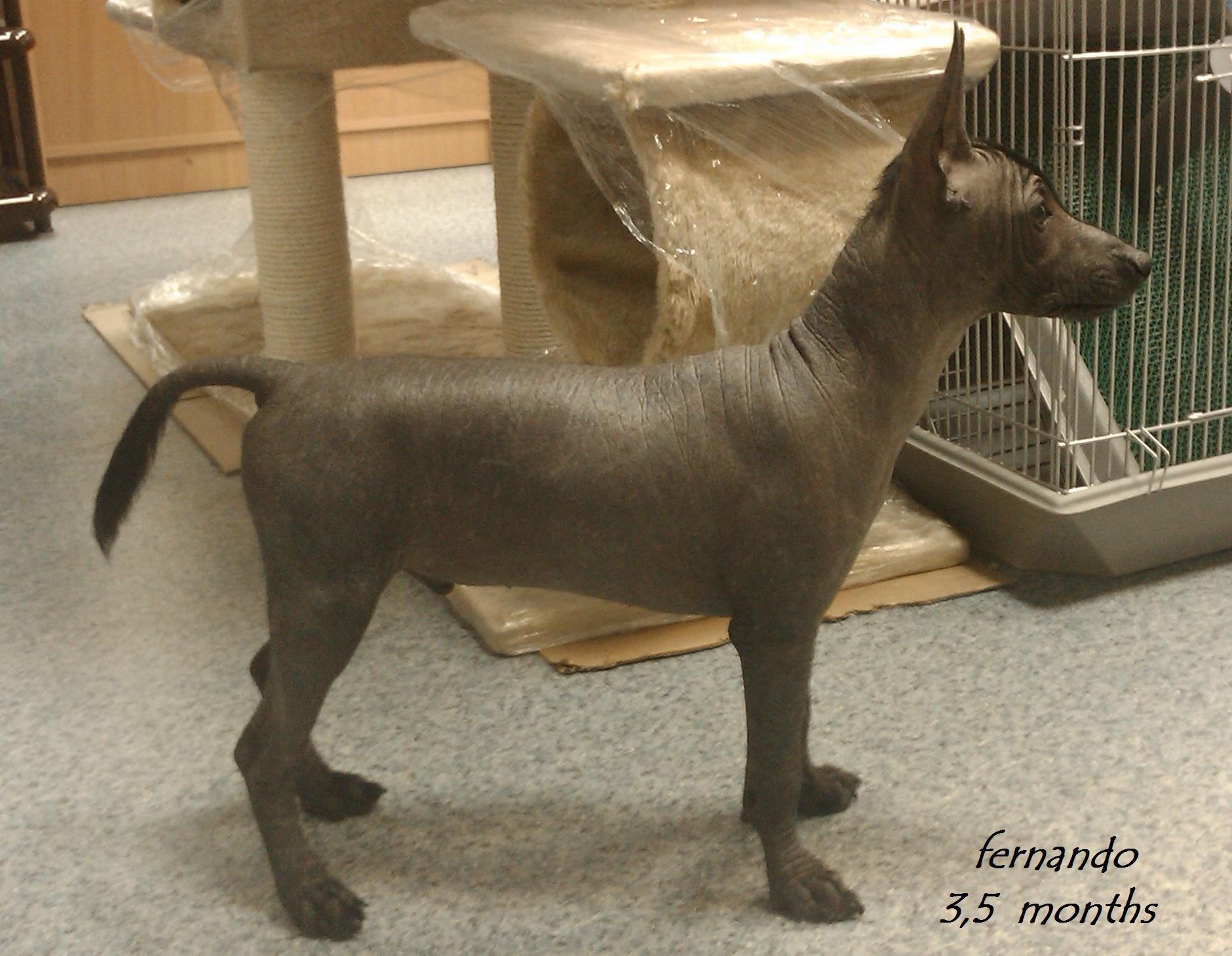 intermediate size, puppy