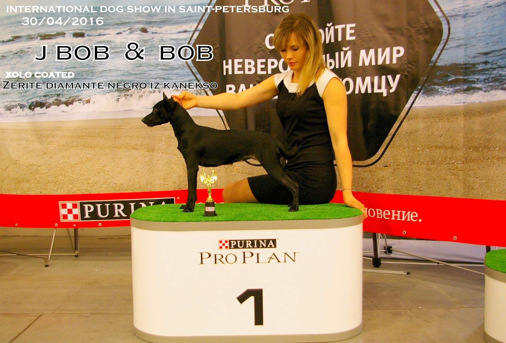 Ади- ЛПП на международной выставке. Первый ксоло в шерсти в северо-западе- Юный Чемпион России