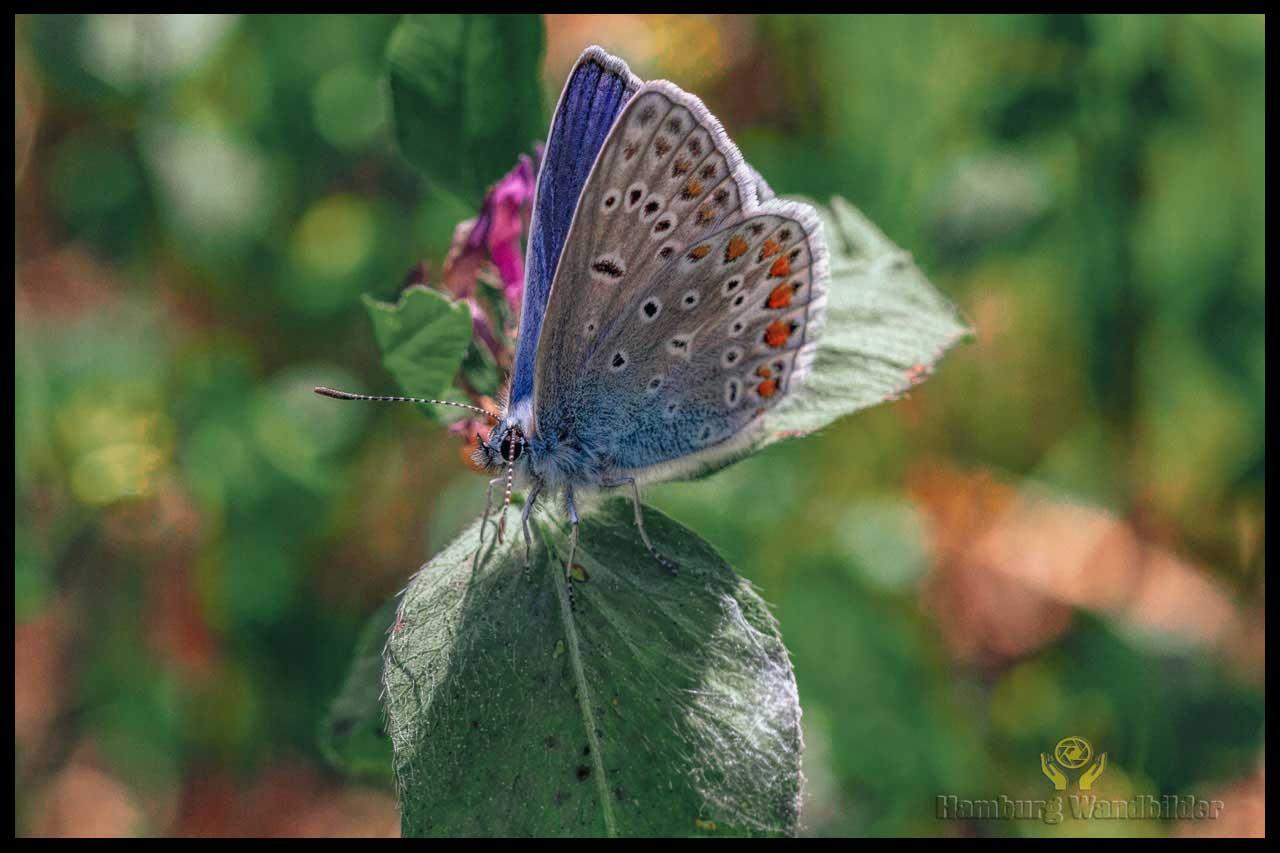 Schmetterling  /  119