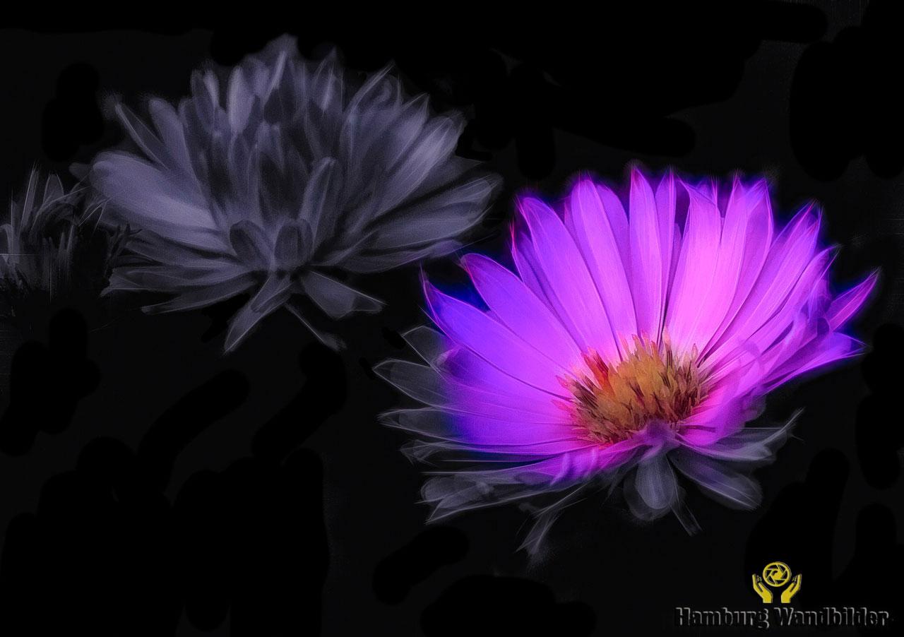 Blumen  /  932