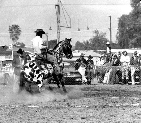 Appaloosa Old-Line | Appaloosa Old-Foundation | Appaloosa Sport Horse | By SIX C Appaloosa