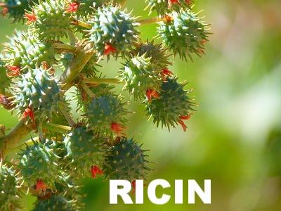 AMETHIC HUILE DE RICIN BIO
