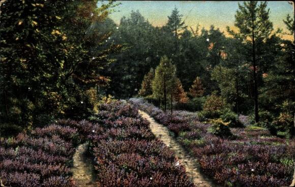 Aus dem Jahr 1904 Ansichtskarte / Postkarte Rosengarten Emsen in Niedersachsen, Heidepartie an der Karlsquelle