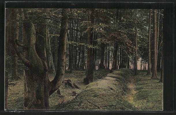 Postkarte von 1911 / Emsen Königsgraben