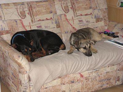 Zwiebel und Goldorin teilen sich ihren Sofa.