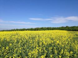 Ackerbau in der Hildesheimer Börde Agrar Vorharz