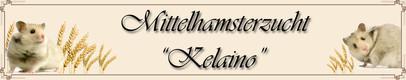 Teddyhamsterzucht ,,Kelaino'' von Jessica Weiße aus Lorsch/Hessen