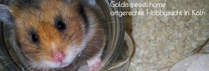Gold- und Teddyhamsterzucht ,,Goldis sweet home''  von Tanja Müller aus Köln/NRW
