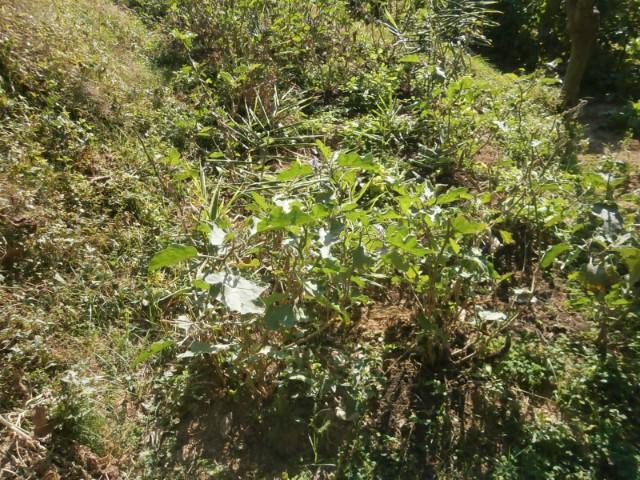 何が育つか、とにかく種を播いてみる。苗を植えてみる。