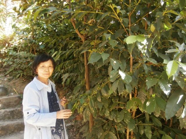 シスター金谷とコーヒーの木。コーヒーの木も植えたそうです。