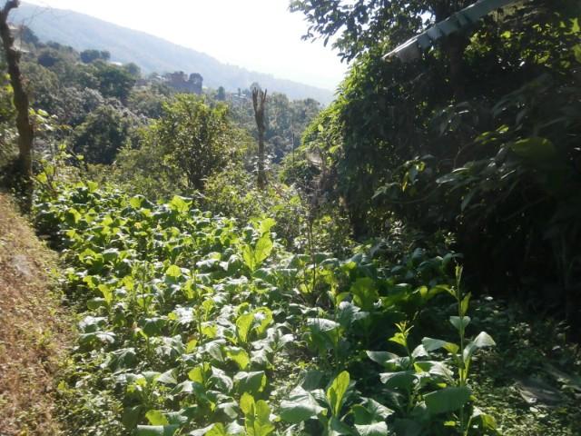 学校敷地内のちょっとした空き地はすべて畑に変身します。