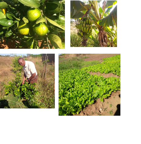 農園、果樹園。みかん、バナナ、野菜、落花生・・