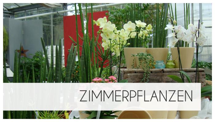 Hier geben wir Ihnen einen Überblick über unsere Zimmerpflanzen.