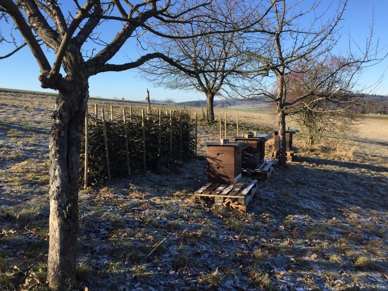 Die Streuobstwiese bei Frost