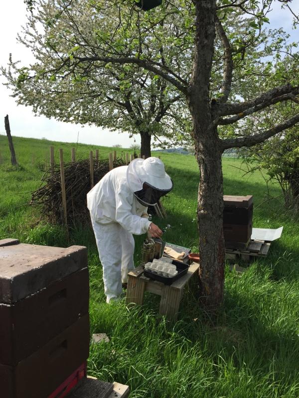 Unsere Bienenstöcke auf der Streuobstwiese - Imker bei der Arbeit