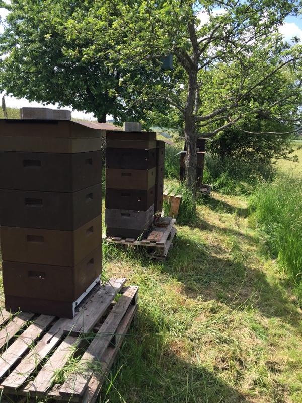 Unsere Bienenstöcke auf der Streuobstwiese
