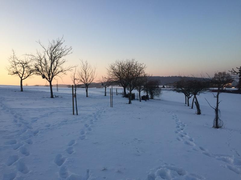 Winter auf der Streuobstwiese - Abendlicht