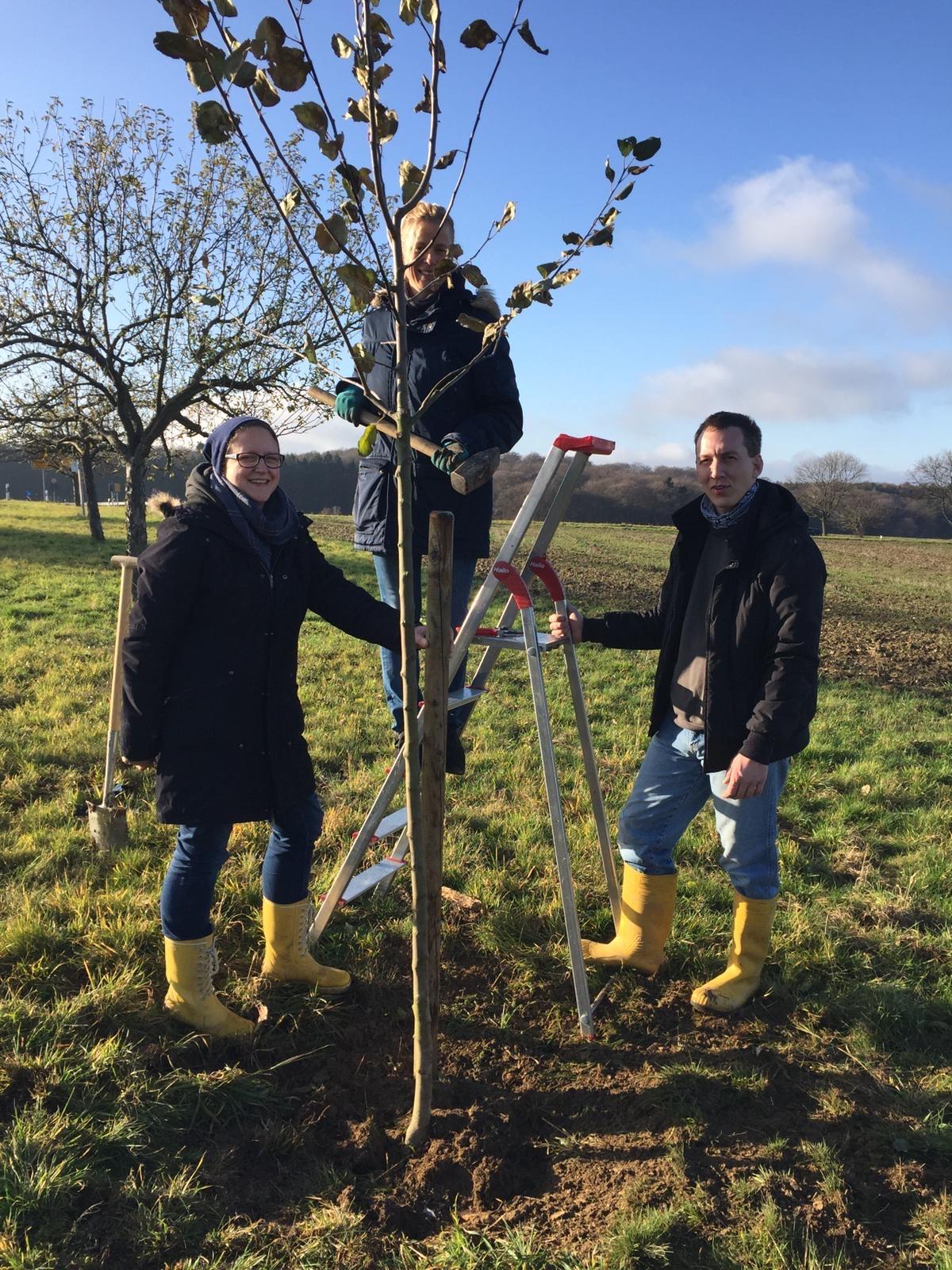 3 neue Bäume werden an der Allee gepflanzt (Winter 2019)