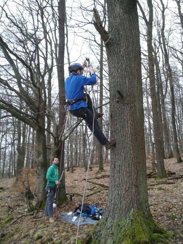Ein Waldkauzkasten wird aufgehängt