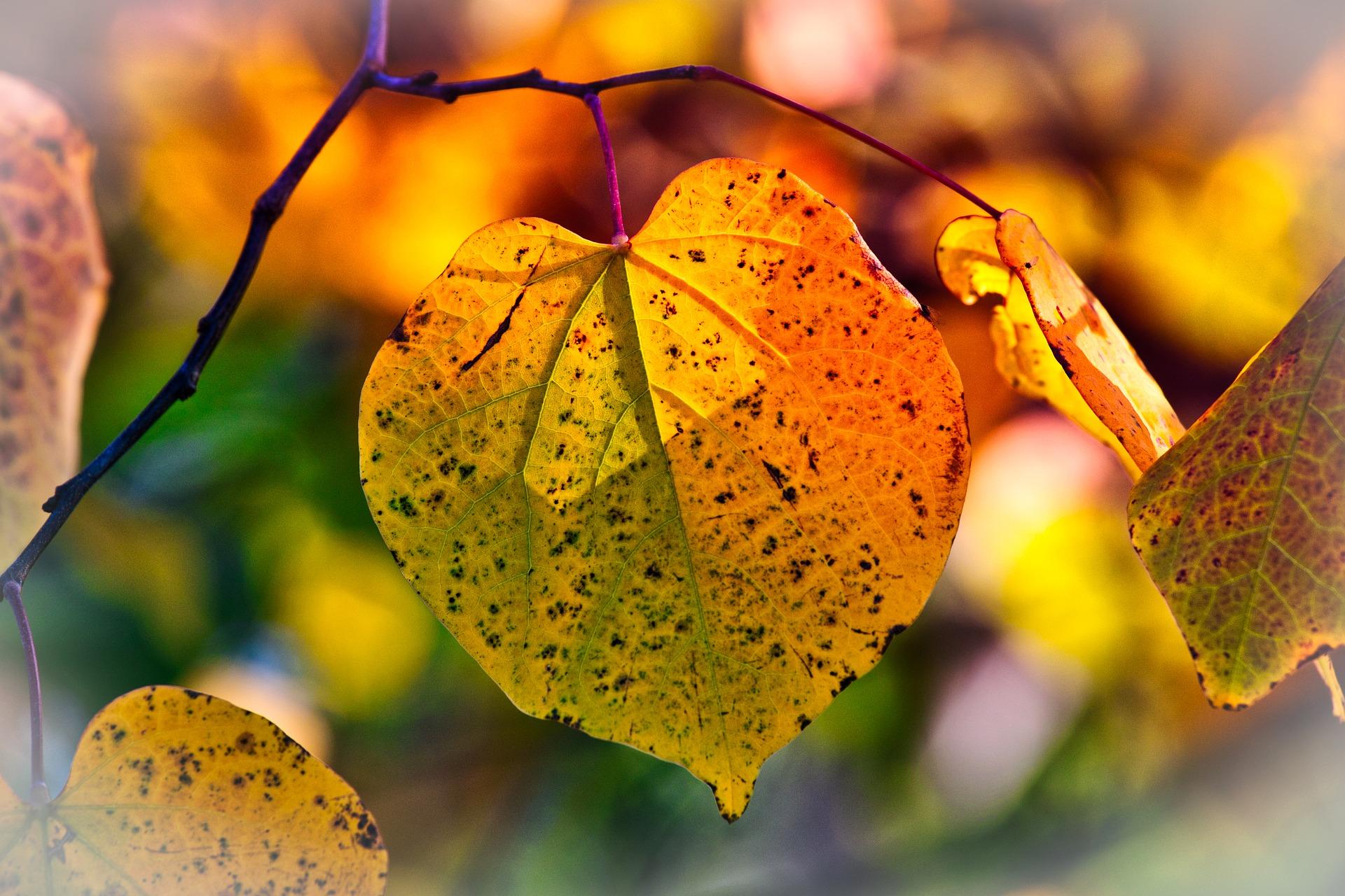 Herbstblues adé