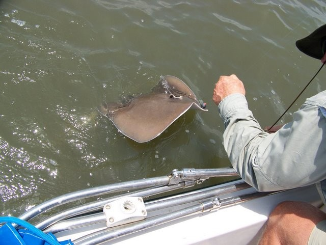 This stingray put up quite a battle, but Lynes prevailed!