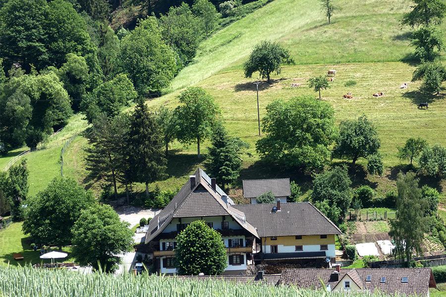 Muserhof: Mitten im Schwarzwald
