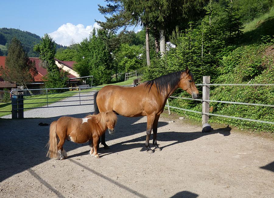 Ein Ausritt hoch zu Pferd