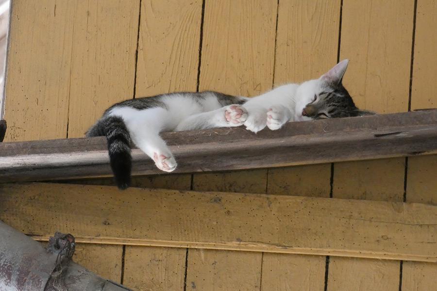 Katze Kira müde
