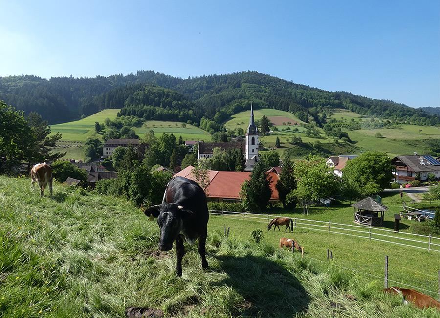 Muserhof: Blick von der Weide ins Dorf