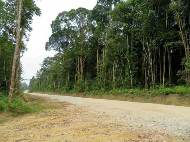 ジャングルを切り裂いて造成中の道路。