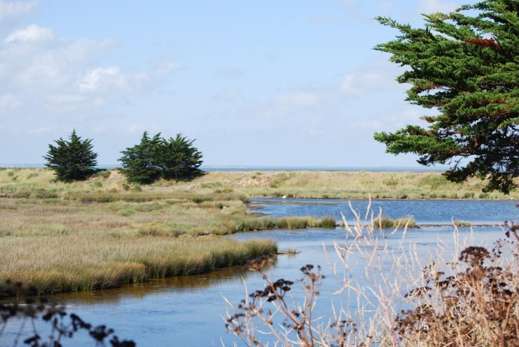 La réserve naturelle du polder de Sébastopol