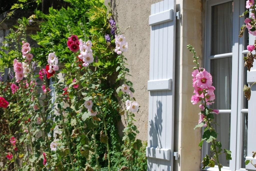 Les roses trémières bordent les maisons de l'île