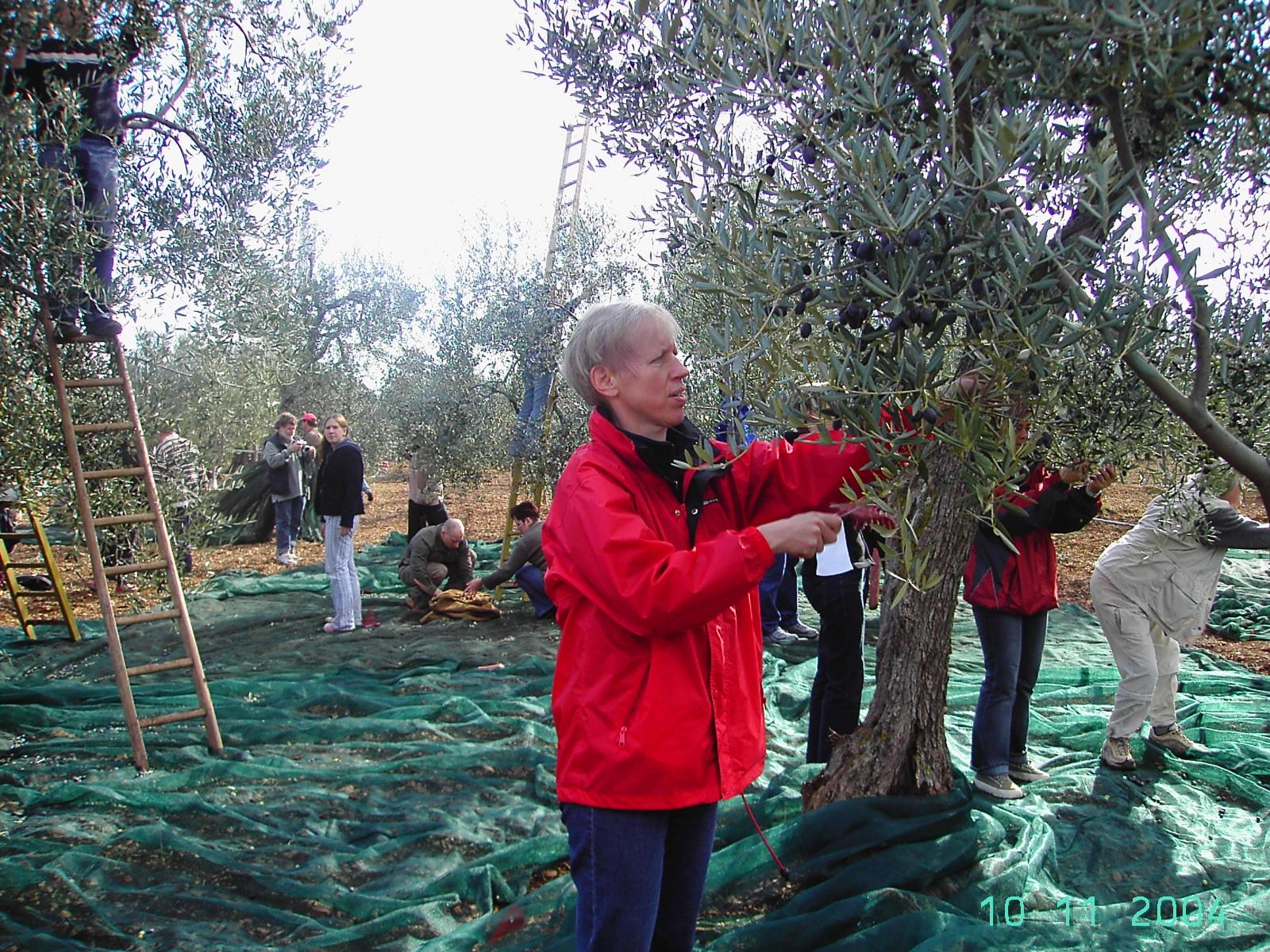 Die arteFakt Olivenölkampagne in Wilstedt ist jetzt Konsumgenossenschaft geworden.