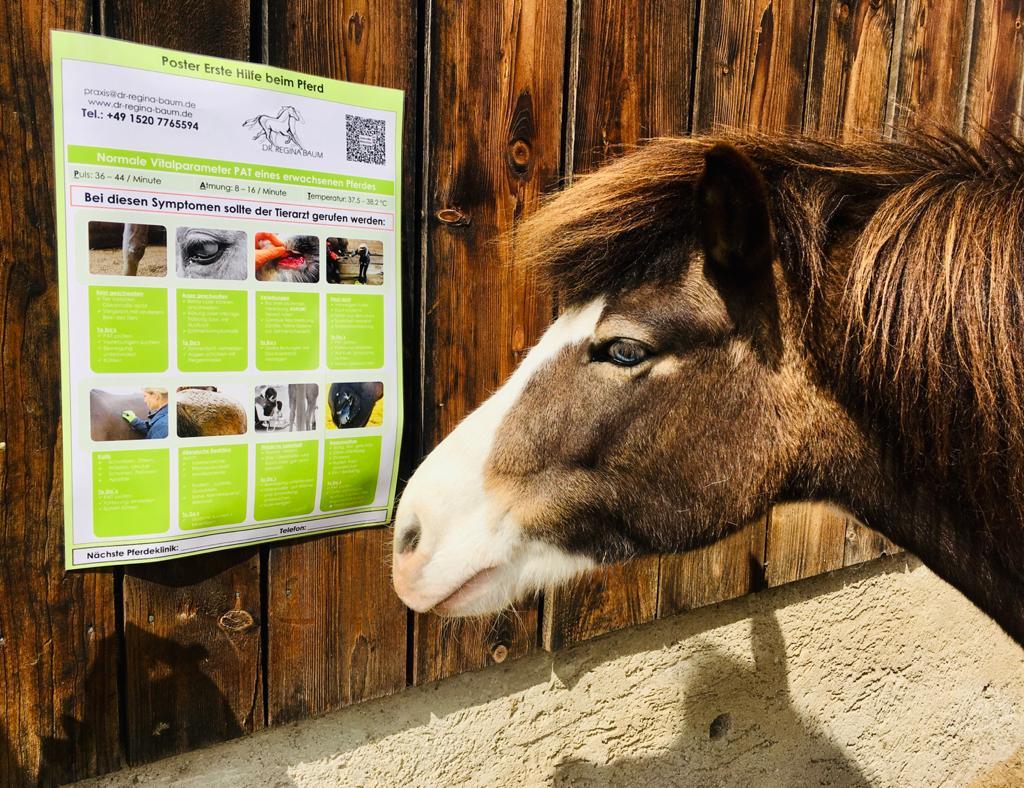 Poster Erste Hilfe beim Pferd
