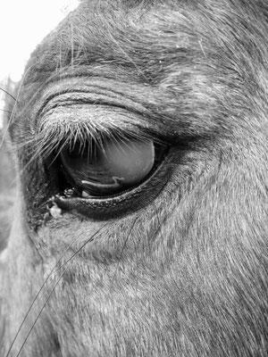 Augenerkrankung mit Hornhauttrübung