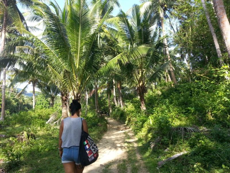 Philippines trees