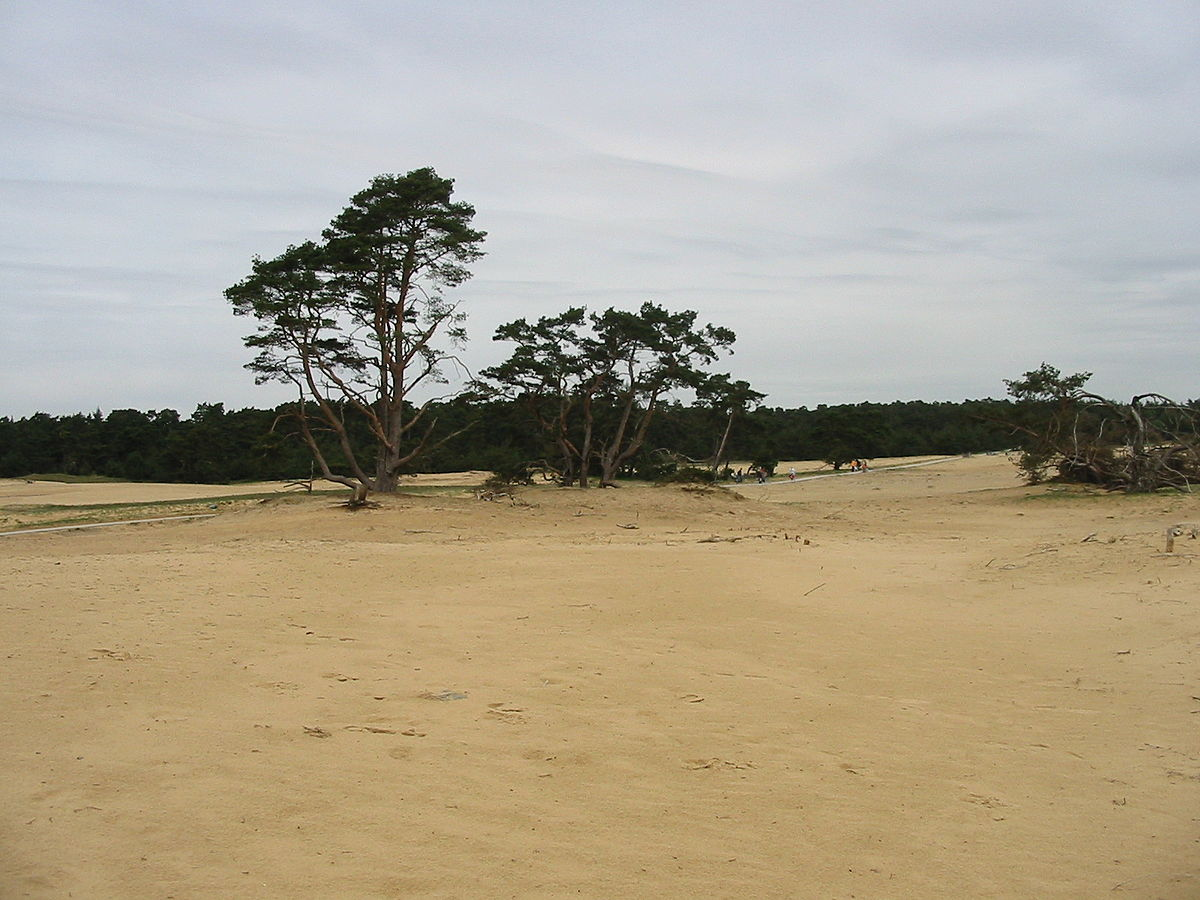 Zandverstuiving De Zoom
