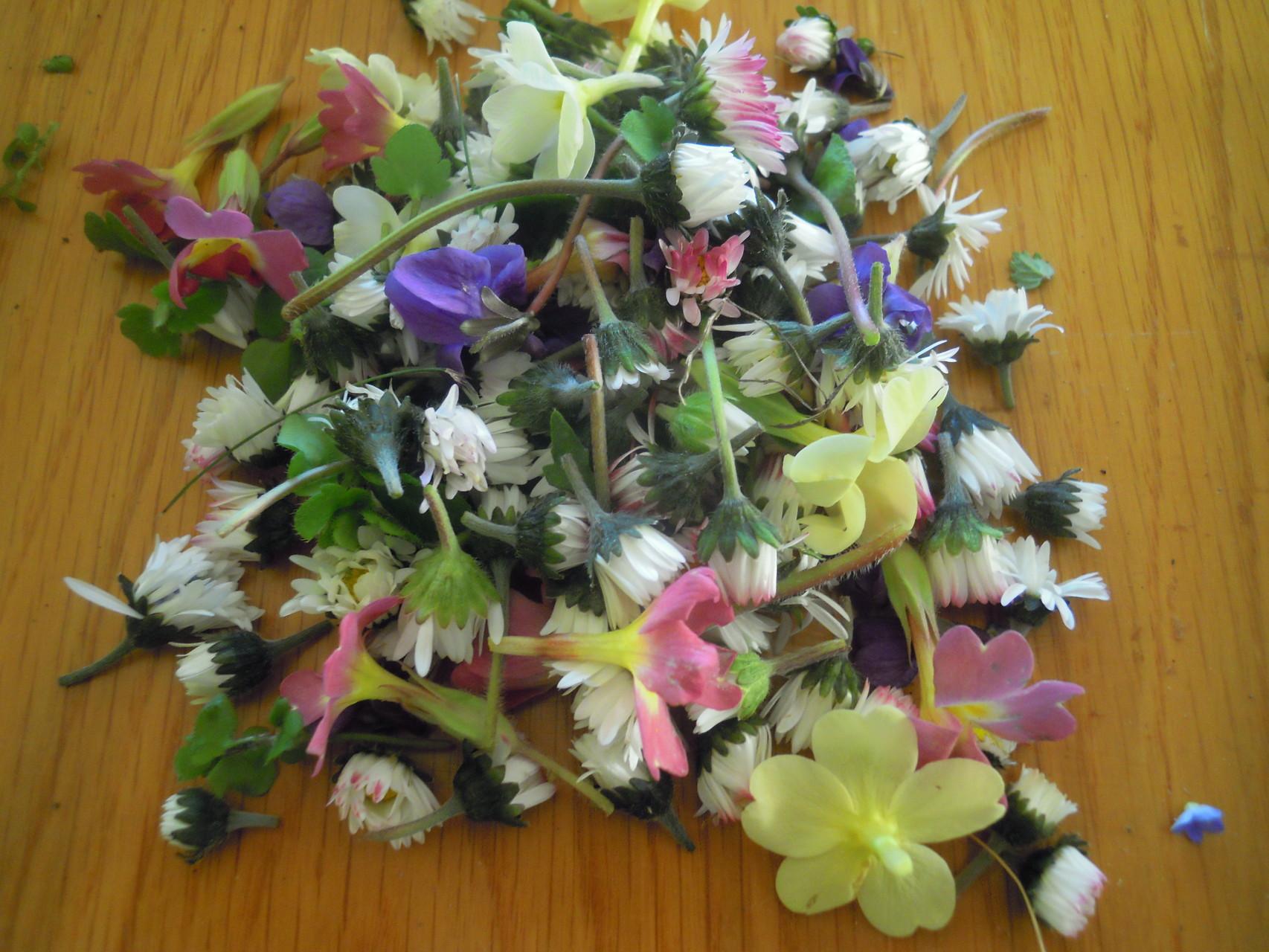 Blüten des Frühlings