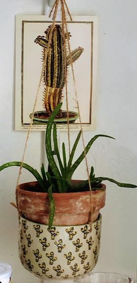 Suspension Cactus