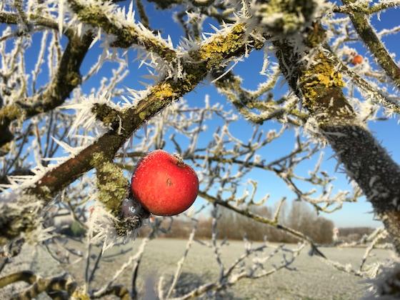 Winterzeit - Apfelzeit