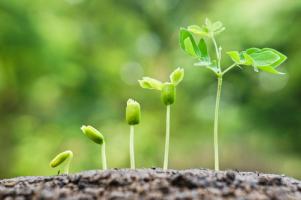 Persönlichkeitsentwicklung und Wachstum