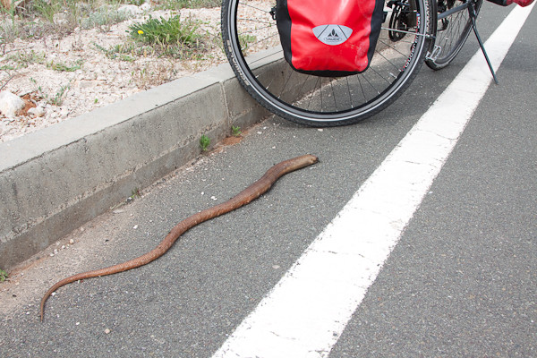 Vorsicht, Schlangen