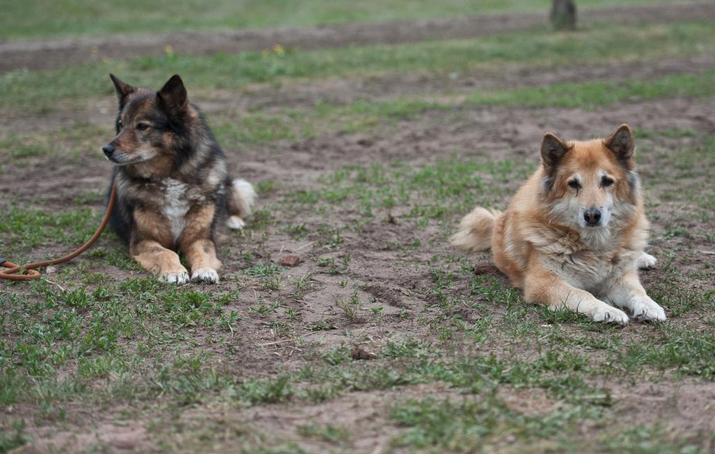 Mein Hund Klara (links) und ihre Mama, inzwischen schon 15 Jahre alt.
