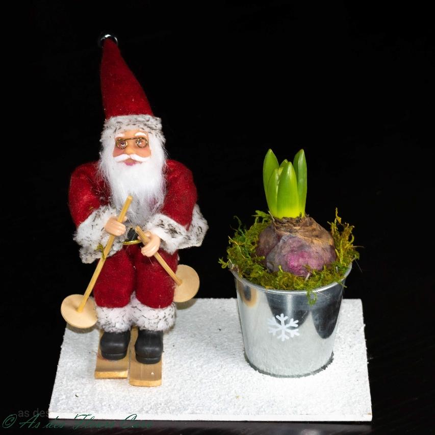 Père Noël sur ski + jacinthe pot métal