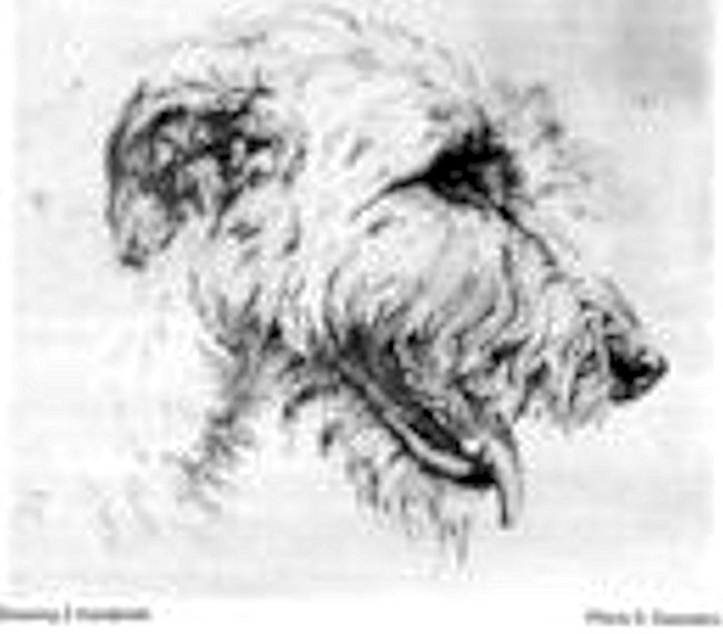 The Erindale Hounds - Irishwolfhound-Kennel