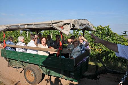 Weinbergtour auf Traktoren mit unseren Mitgliedern von extrafit Bietigheim-Bissingen, Fitnessstudio 50+