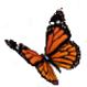 Bild: Schmetterling