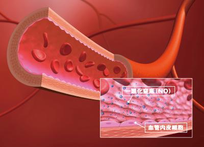 加圧トレーニング 一酸化窒素 免疫
