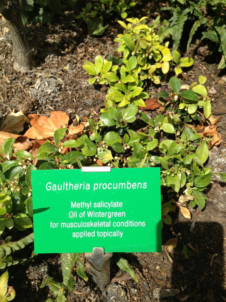 Salicylsäure- der Kommunikationsstoff der Pflanzen